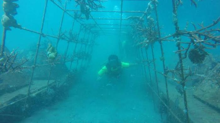 Jelajah Spot Karang Cangkok di Bawah Selat Lembeh Bitung