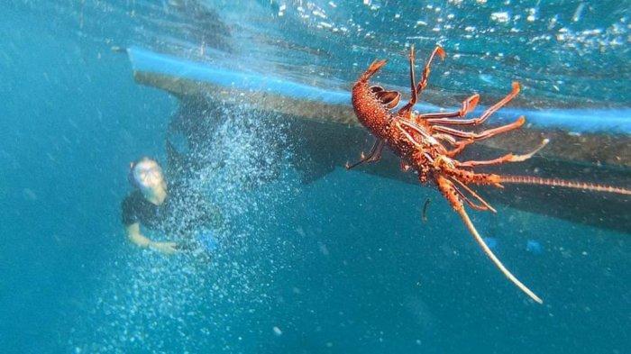 Arti Mimpi Tentang Lobster, Ternyata menunjukan Kebahagiaan, Cek Tafsiran Lengkapnya