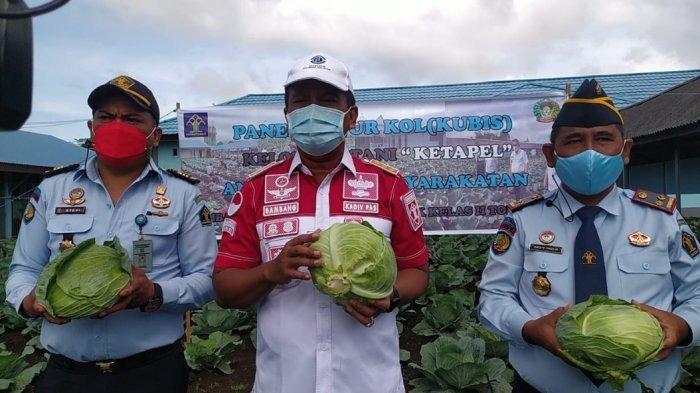 LPKA Tomohon Berhasil Kembangkan Kol dan Kubis, Bambang Haryanto Panen Hasil Pertama