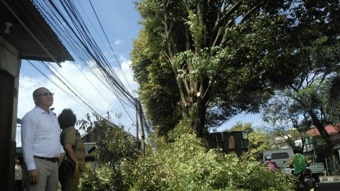 PLN Area Manado Lakukan Pemangkasan Pohon Dekat Jaringan