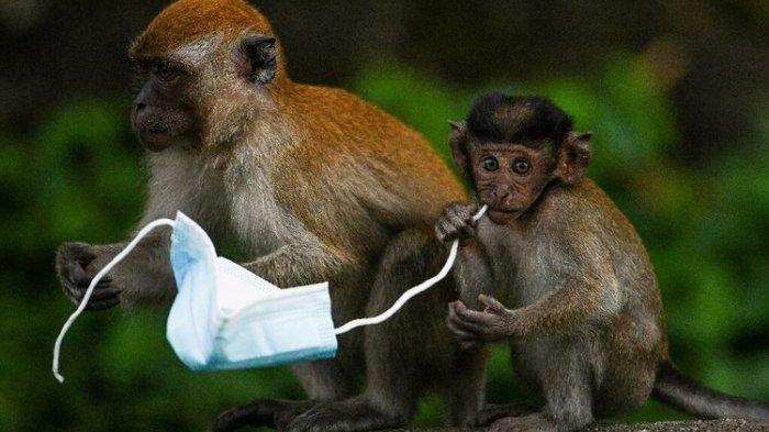 Bahayanya Limbah Masker Sekali Pakai Mengancam Habitat Hewan, Ini Fakta-faktanya