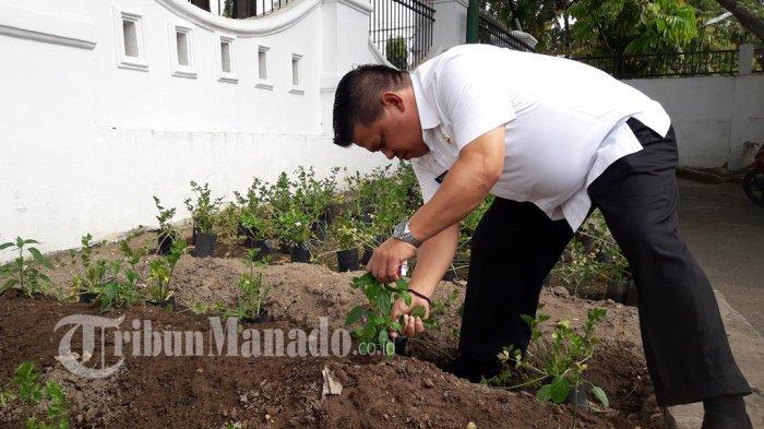 Wawali Kotamobagu Nayodo Koerniawan Tanam Seledri di Halaman Rudis, Profesi Petani Tak Ditinggalkan