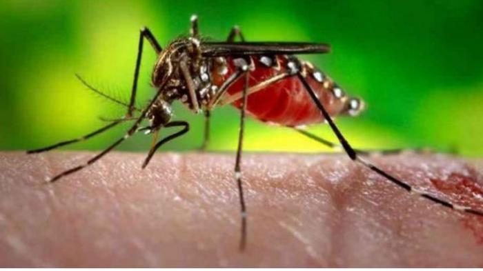 Mitos dan Fakta yang Beredar di Masyarakat Tentang Penyakit Demam Berdarah