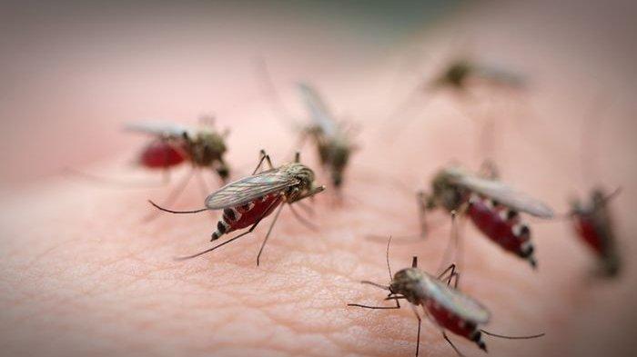 Foto : Ilustrasi gigitan <a href='https://manado.tribunnews.com/tag/nyamuk' title='nyamuk'>nyamuk</a>