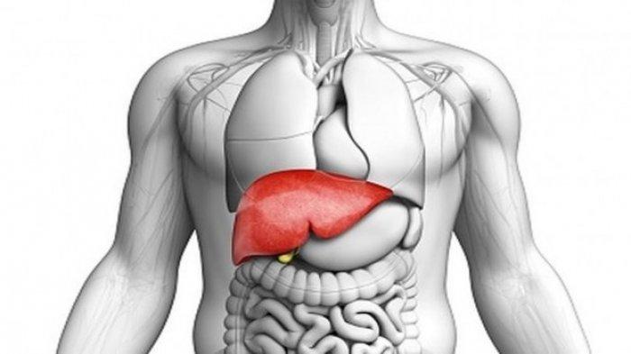 Organ tubuh