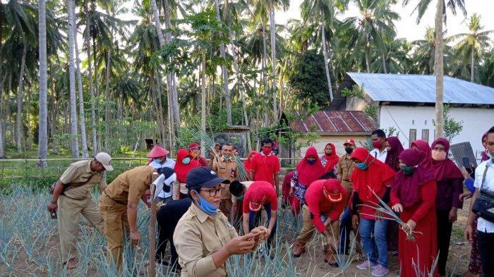 DPKP Bakal Kucurkan Bantuan Tanaman Holtikultura Bagi Kelompok Petani di Bolsel