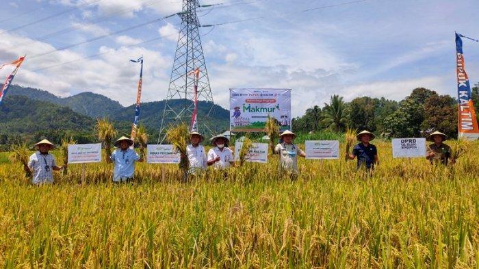 Panen Raya Program Makmur Agro-Solution di Kabupaten Bolmong.