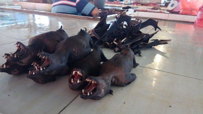 Virus Corona di Cina Jadi Penyebab Harga Jual Daging Kelelawar Menurun di Tomohon