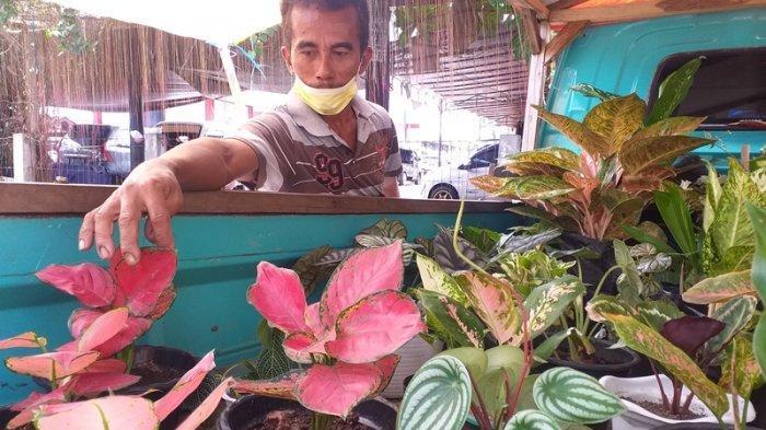 PPKM di Manado Turun Level, Ini Harapan Pedagang Tanaman Hias di Pasar Bersehati