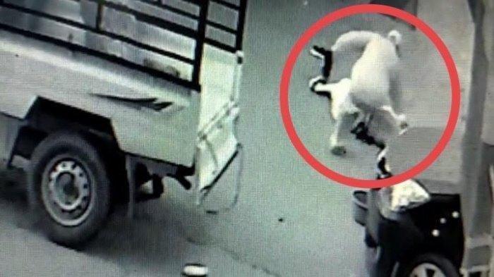 Terekam CCTV Seorang Sopir Bacok Oknum PNS hingga Tewas, Pelaku Mengaku Sakit Hati