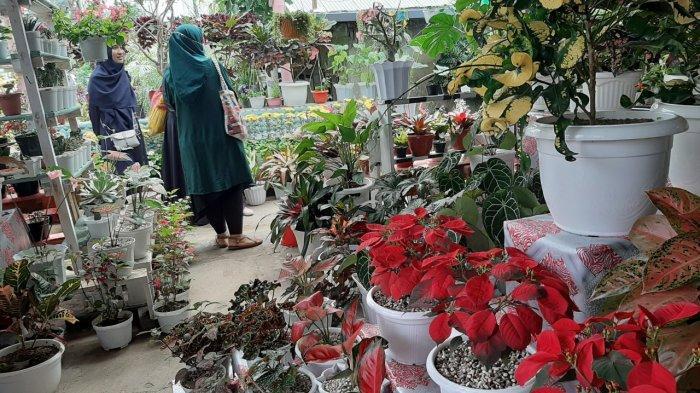 Cerita Penjual Bunga Asal Tomohon, Kini Raup Uang Jutaan Rupiah per Pekan