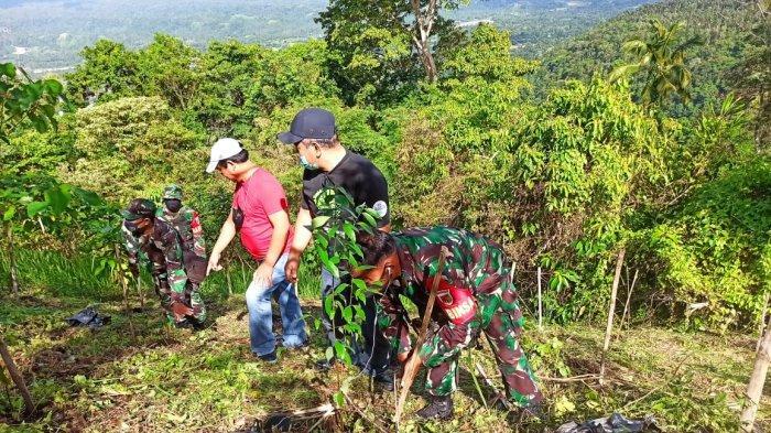 Pemkab Minahasa Utara Tanam 75 Bibit Pohon Kayu Manis di Kaki Dian
