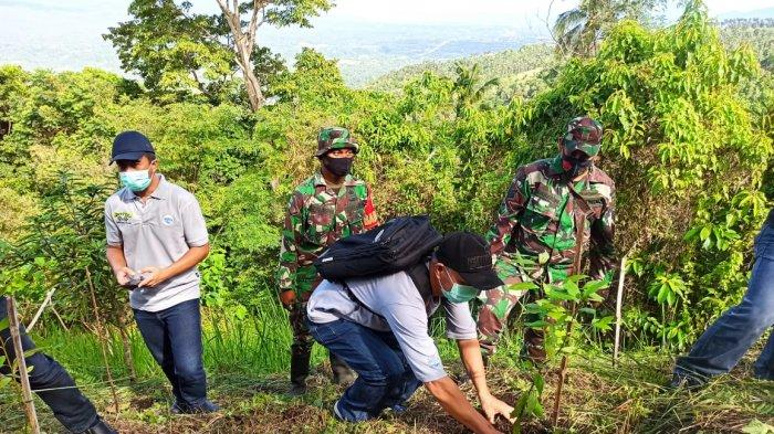 Penanaman bibit pohon kayu manis di kawasan Kaki Dian, Airmadidi, Minahasa Utara, dalam rangka Hari Keanekaragaman Hayati Internasional.