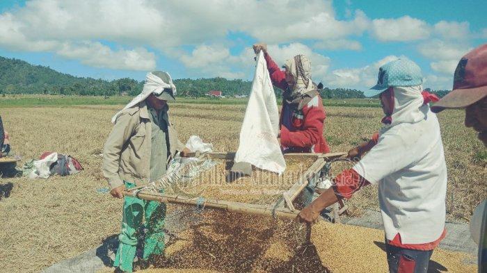 Petani Sulut Menanti Stimulus Covid-19 Presiden Jokowi, Hapus PPn Hasil Pertanian