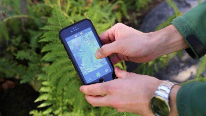 3 Aplikasi Ini Bantu Kenali Tanaman Dan Hewan Yang Anda Temui Di Alam Tribun Manado