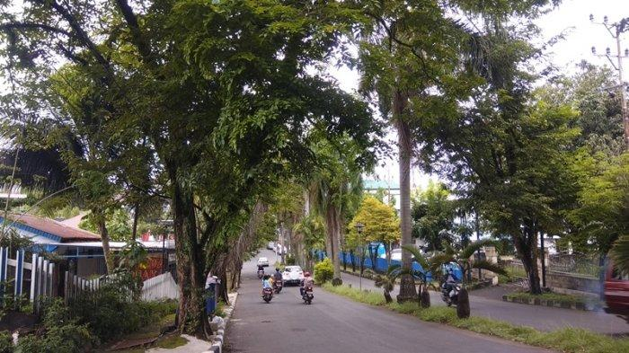 Akibat Hujan Deras Disertai Angin Beberapa Pohon Tumbang, C3 Manado Imbau Segera Hubungi 112