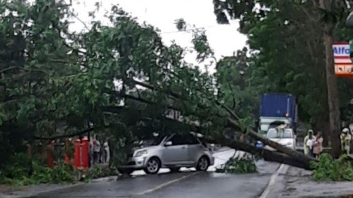 Pohon Tumbang Timpa Mobil di Ruas Jalan Kauditan, Pengendara Diminta Waspada saat Melintas