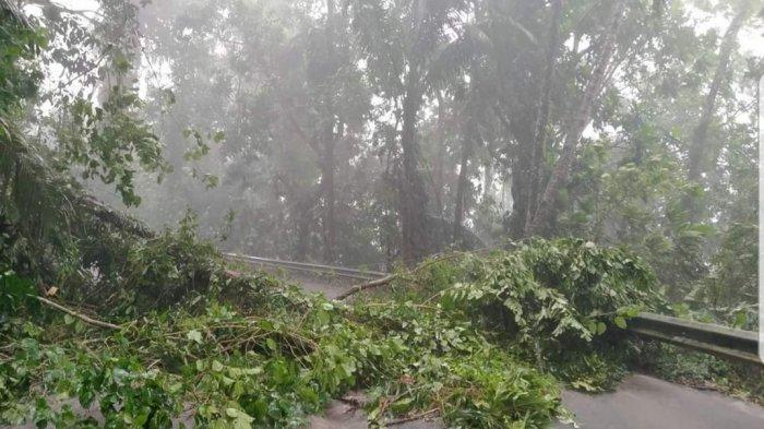 Hujan Lebat Disertai Angin Kencang Landa Siau Kabupaten Sitaro, Waspada Pohon Tumbang