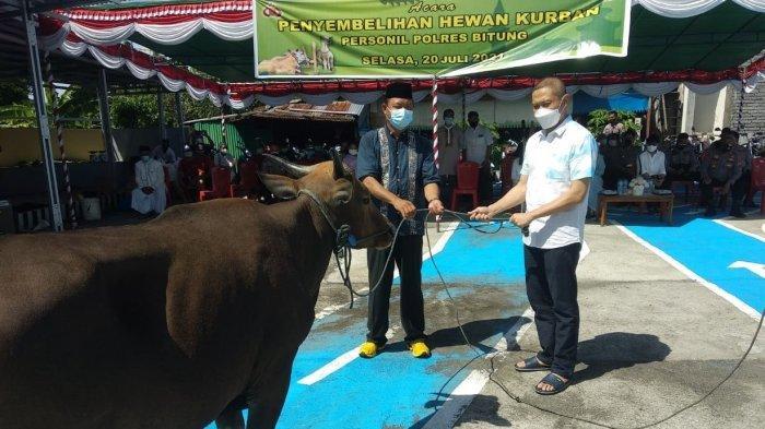 Polres Bitung Sumbang Lima Ekor Sapi Kurban, Bantu Warga Terdampak Covid-19