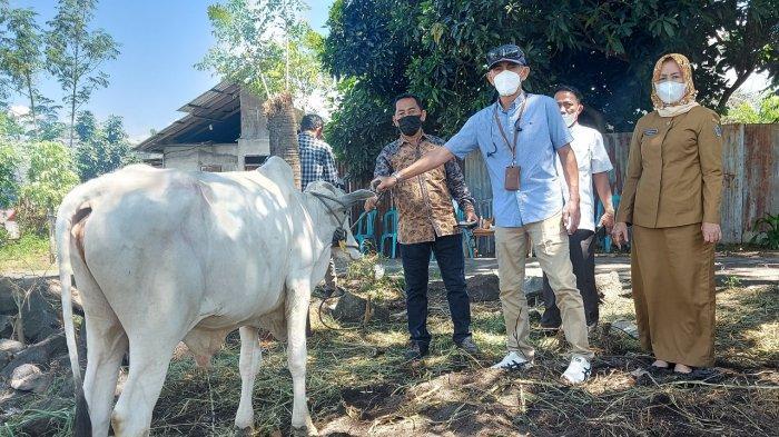 PT MSM Sumbang 21 Ekor Hewan Kurban di Bitung dan Minut