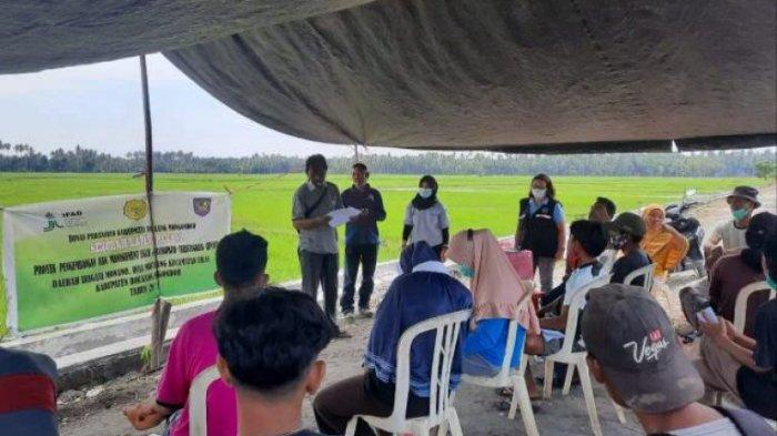 Dinas Pertanian Bolmong Gelar Sekolah Lapang bagi Petani di 12 Kecamatan
