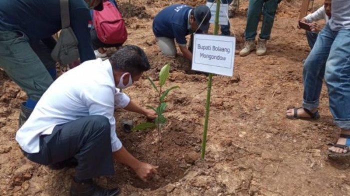 Saat Pohon Menghapus Jejak Berdarah, Penutupan PETI Potolo Bolmong