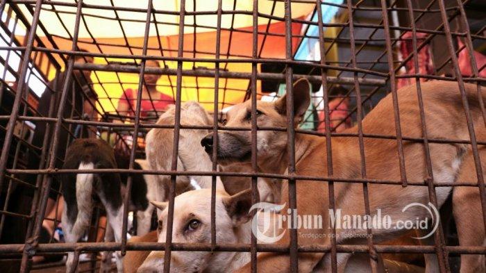 Kisah Aktor Inggris dan Aktivis Hewan Dunia Selamatkan Anjing & Kucing di Pasar Ekstrem Tomohon