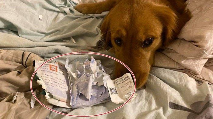 Seekor Anjing Gagalkan Majikannya yang Hendak Pergi ke Wuhan, Koyak Paspor, Tuan: Ia Melindungi Saya
