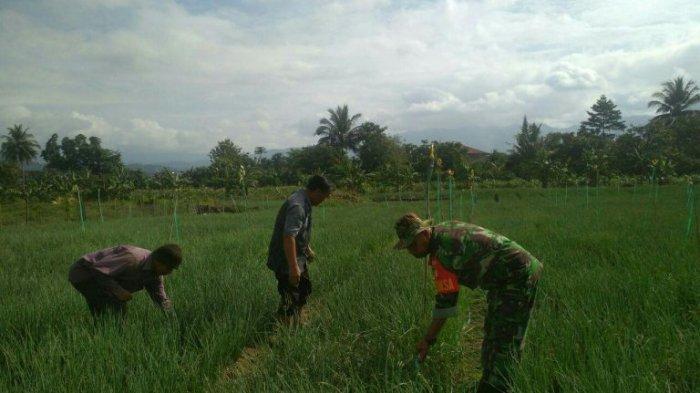 Serda Ruslan Bantu Petani Bawang Merah Bersihkan Gulma