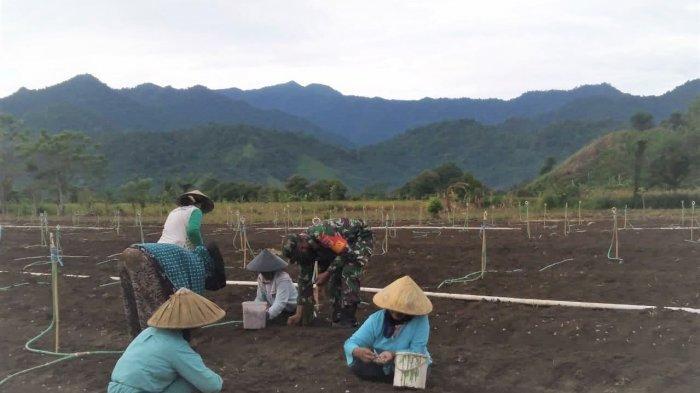 Serma Nuryadin Ingatkan Warga Soal 3M saat Dampingi Petani Bolmong