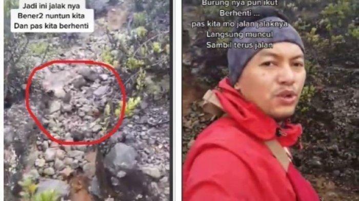 Foto : Kolase foto tangkapan layar Burung Jalak yang Pandu Pendaki Tersesat.
