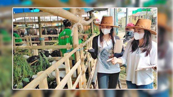 Cara Tak Biasa Dilakukan Pedagang Sapi di Surabaya, Calon Pembeli Dilayani Wanita Cantik