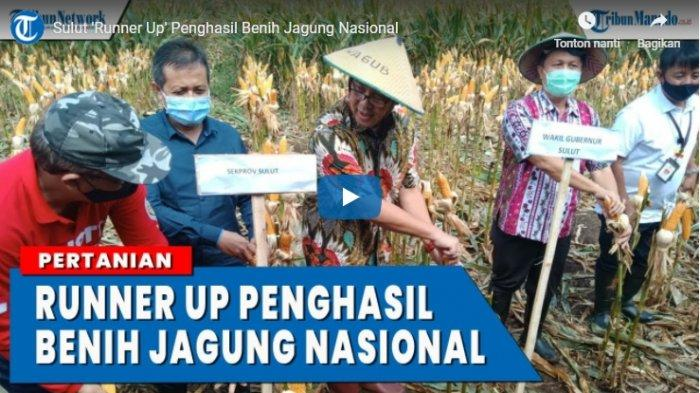 VIDEO Sulut 'Runner Up' Penghasil Benih Jagung Nasional