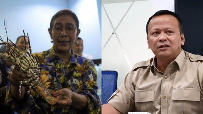 Susi Pudjiastuti Geram ke Edhy Prabowo yang Putuskan Tetap Ekspor Benih Lobster: Kenapa Harus Bibit?