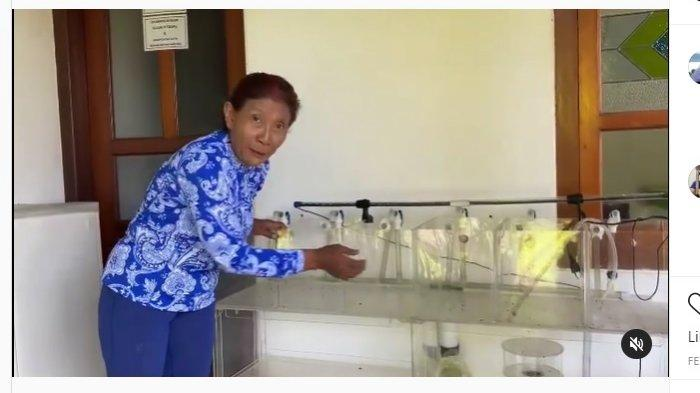 Kisah Hadi yang Berawal Iseng, Akhirnya Bisa Kirim Ikan Cupang ke Menteri KKP Susi Pudjiastuti
