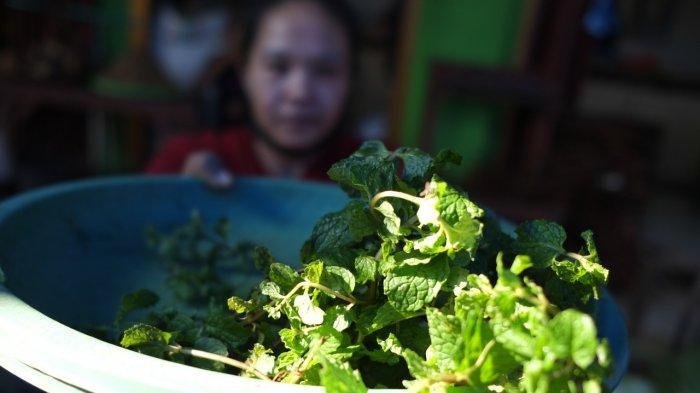 Manfaat Mint untuk Kesehatan: Cocok Mengobati Iritasi Pencernaan dan Meredakan Pilek