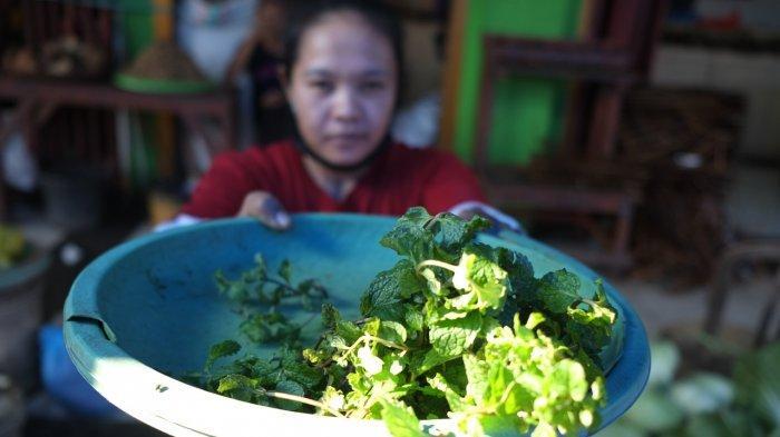 Tumbuh Subur di Sulawesi Utara, Berikut Manfaat Daun Mint bagi Kesehatan