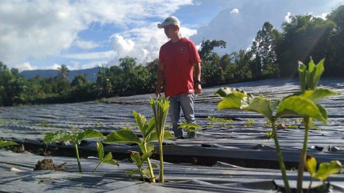 Investor Lokal Jajal Peluang Investasi Tanaman Porang, Siap Ekspor ke Luar Negeri