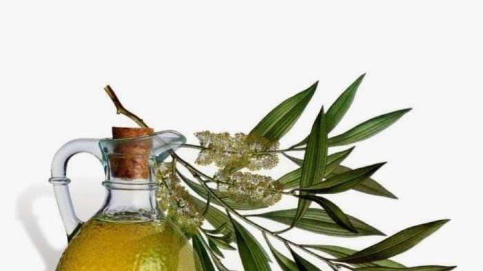Ilustrasi Tea Tree Oil