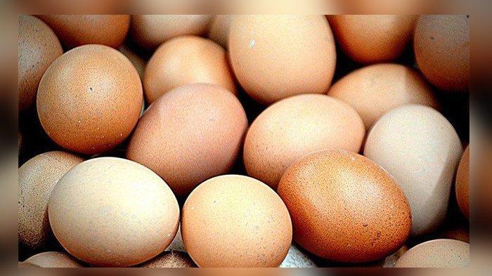 Diet Telur Bisa Turunkan Berat Badan Dalam Seminggu Simak Menu Hariannya Tribun Manado