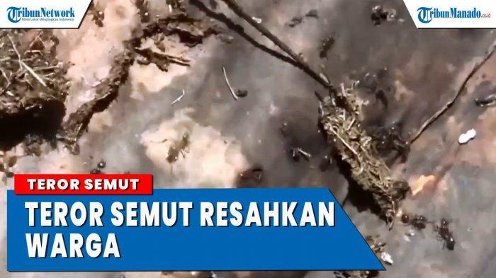 VIDEO Teror Miliaran Semut Hantui Warga