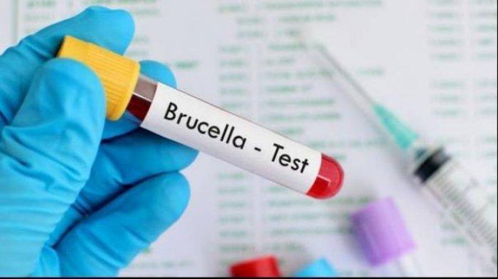 Mengenal Brucellosis, Infeksi Bakteri Karena Hewan, Berikut Gejalanya