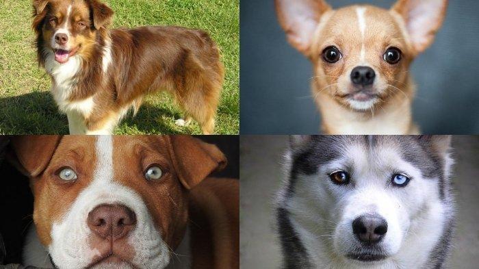tes kepribadian pilih satu anjing yang anda sukai