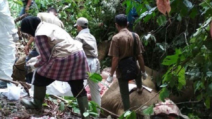 Viral! Gubernur Aceh akan Beri Uang Rp 100 Juta Bagi Pembunuh Gajah Bunta