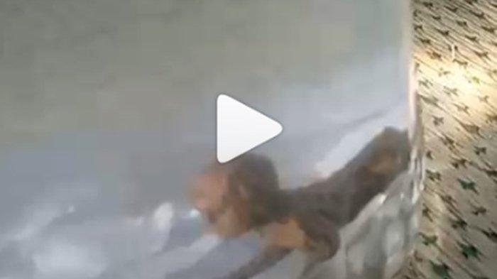 Viral Video Tuyul Ditangkap Warga, Disekap di Toples, Penduduk Desa Heboh