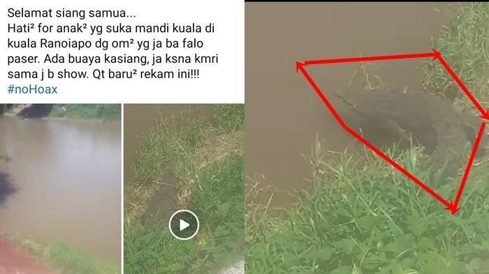 Viral di Medsos, Buaya Sepanjang 4 Meter Kembali Muncul di Sungai Ranoyapo Minahasa Selatan