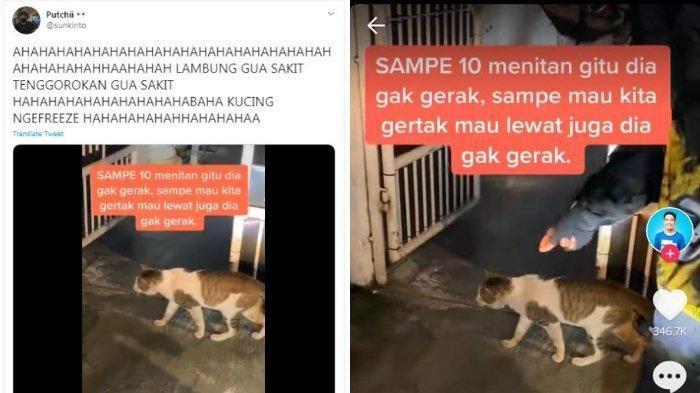 VIRAL Video Kucing Nge-Freeze Selama 10 Menit, Pengunggah: Ini Bukan Kali Pertama