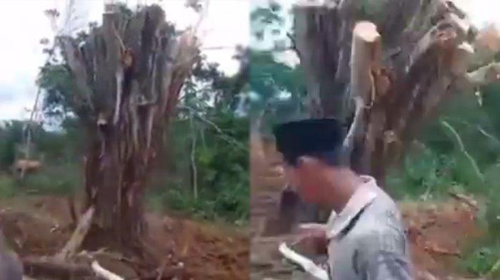 Viral Video Pohon yang Ditebang di Daerah Kuburan Ini Berdiri dengan Sendirinya, Netizen Heboh