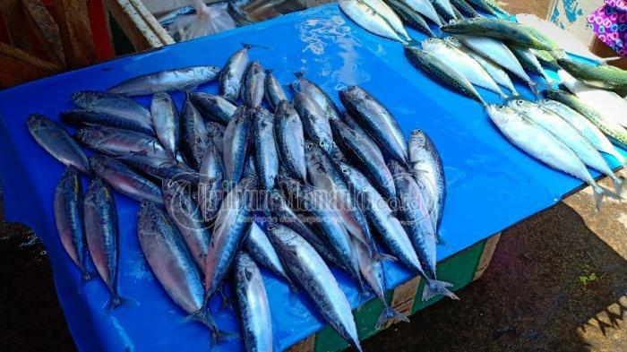 Ikan Cakalang Picu Deflasi DI Manado