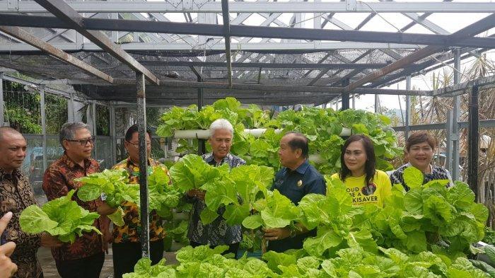 Wali Kota Bitung Maximiliaan Lomban Bersama Direksi Bank SulutGo  Panen Sayuran Hindroponik.